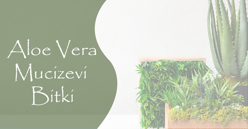Aloe Vera: Mucizevi Bitki